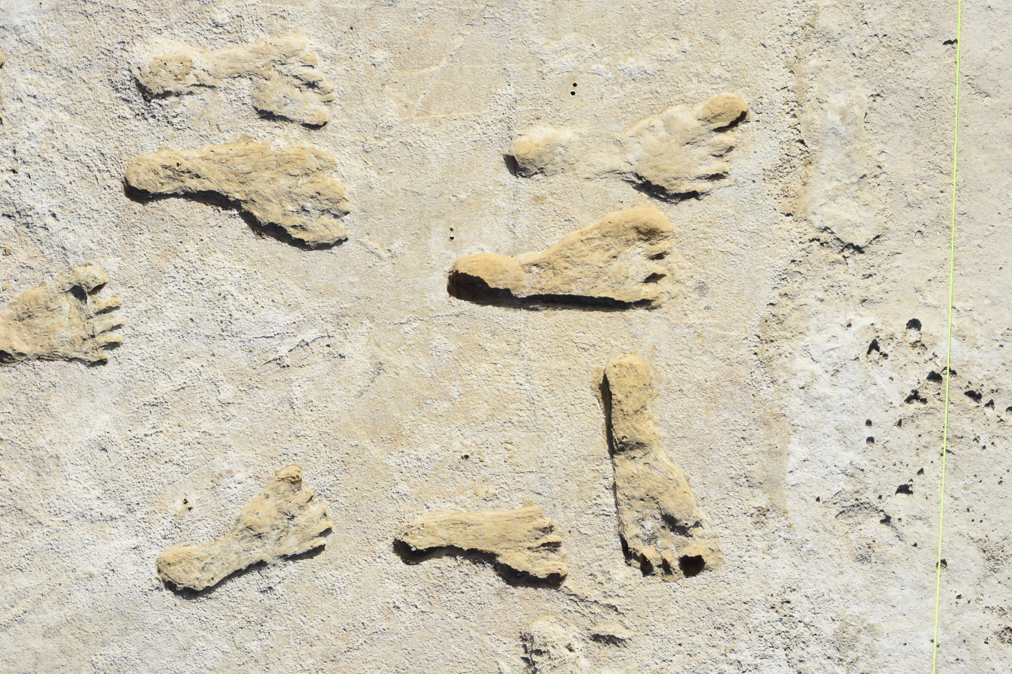 Footprint fossils recently discovered in White Sands National Park